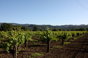 Old Growth Petite Syrah